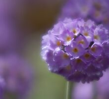 Botanicals - Dream by Stephen Rowsell