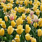pink among a sea of yellow by 1busymom