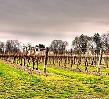 Riverbend Inn & Vineyard, Niagara on the Lake by Jamie Lamb
