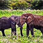 Elephant Hug - Amboseli National Park - Kenya by Scott Ward