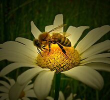 Being a Bee by bicyclegirl