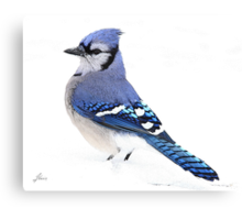 Uplifting Blue Canvas Print