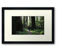 Awe Amongst the Redwoods Framed Print