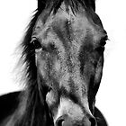 Black Beauty by Kimberly Palmer