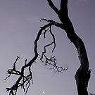 """Moon - - Tree"" by Husky"