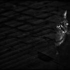 Window cat. by Sime Jadresin