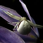 Crab Spider on a Camas by bicyclegirl