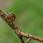 snail by Dawn Barger