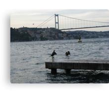 The cormorants  Canvas Print