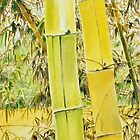 Bamboo - Taiwan by Rainer Jacob