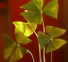 The Luck O' the Irish...Shamrocks by Gary Boudreau