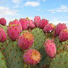 Opuntia Cactus, Santa Ana Riverbed by Maggie Woods