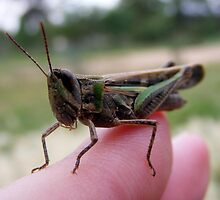 my grasshopper friend. by Elizabeth Rose Rawlings
