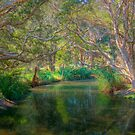 Centenial Park Riverlet - Sydney, NSW, Australia by Mark Richards
