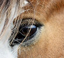 Clydesdale Mare 2 by TeAnne