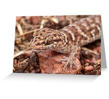 Bynoe's Prickly Gecko Greeting Card