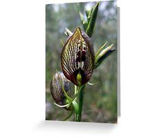 Tartan Tongue Orchid Greeting Card