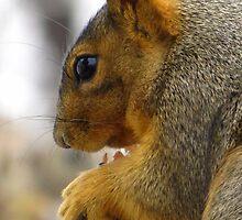 Squirrel by David Shaw