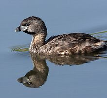 Reflecting On The Pied-billed Grebe by Gary Fairhead
