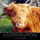 Here's Looking At You - Highland Cow Photograph by Margaret Woodlock-McLean