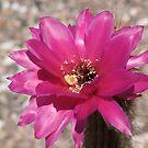 flower in bloom by Bonnie Pelton