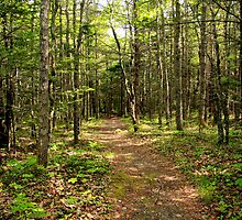 Woodland Trail by Debbie  Roberts