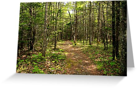 Woodland Trail by Debbie  Roberts