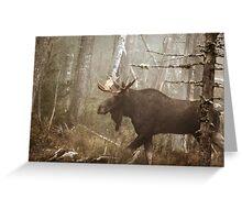 Maine Bull Moose During Mating Season... Greeting Card