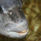Fish Smile by RebeccaBlackman