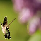 Hummer in Flight by Debbie  Roberts