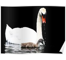 Swan Dripping Poster