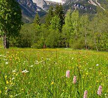 Alpine Spring by Walter Quirtmair