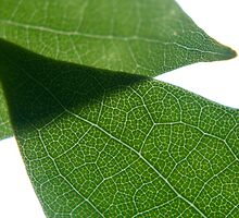 Leaf Overlap by stephenmark photography
