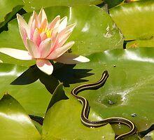 lily pad garter snake by Jef Poskanzer