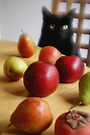 Black Cat with Fruits by Marianna Tankelevich