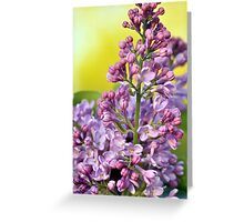 Oh the Aroma of Lilacs Greeting Card