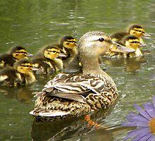 Mommy and Baby Ducks by digitalmidge