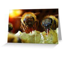 Api, che immettono il miele nelle cellette - missano  ( zocca modena italy).....054 Greeting Card