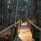 Walkway through the Rainforrest by Stephen Horton