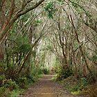 Pathway  by Kristi Robertson