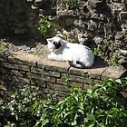 Resting in the Ruins by Kymbo