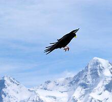 Freedom of flight by banksie1