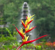 Flower in the rain by johngill