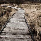 Malham Tarn Marsh Boardwalk by Neil Messenger