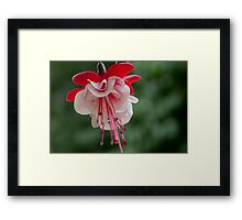 Up Shot Framed Print