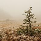 Solitary Pine by Sam Scholes