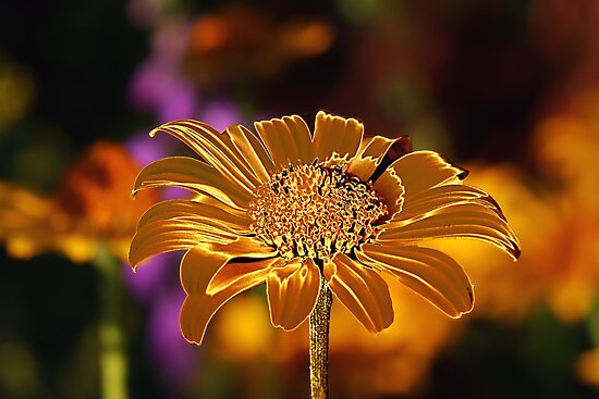 Copper Daisy by Teresa Zieba