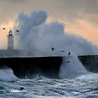 Gulls &amp; Gales by mikebov