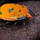 Orange Skin Shield by Samuel Gundry
