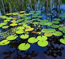Lily Pad by AngelPhotozzz